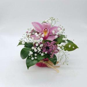 Envío De Orquídeas Rosadas A Domicilio