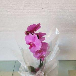 Jarrón De Orquídeas Moradas Orense