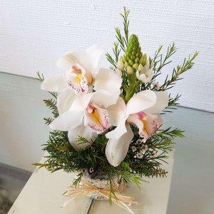Orquídea Blanca Y Centro De Besos De La Madre En Casa