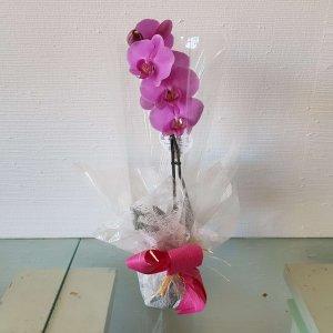 Orquídea Morada Huelva